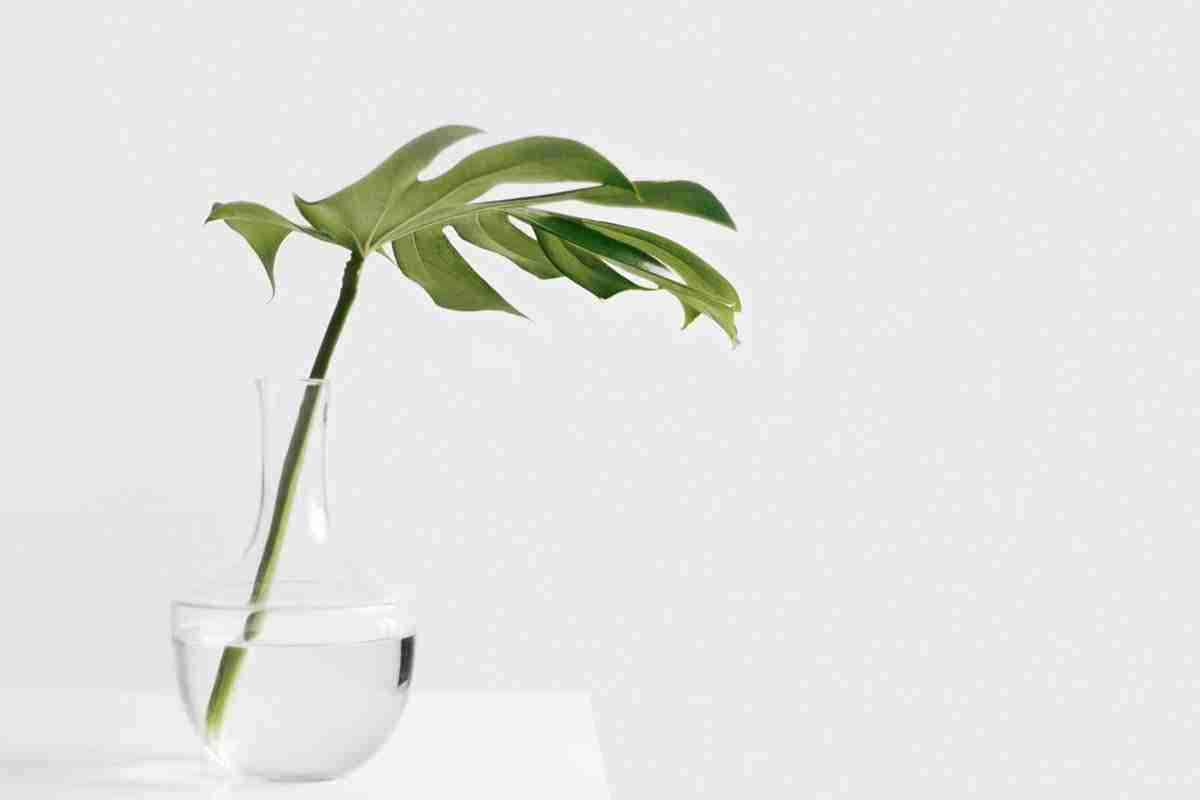 minimalist-person-simple-plant